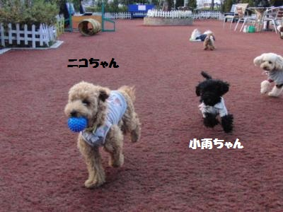 CIMG0824_convert_20110106103018.jpg