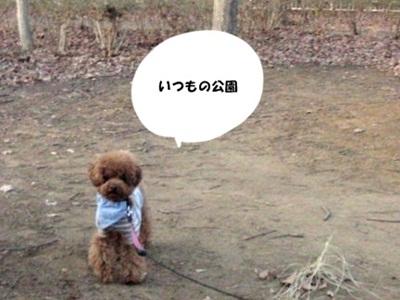 CIMG8299_20110128.jpg