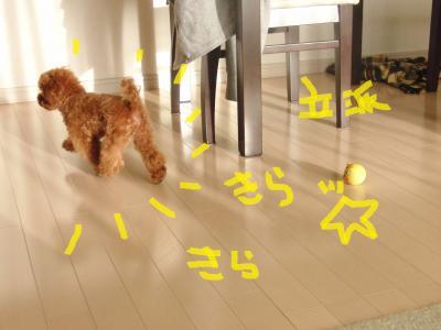 CIMG8929_convert_20100607224201.jpg
