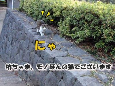 CIMG9033_20110128.jpg