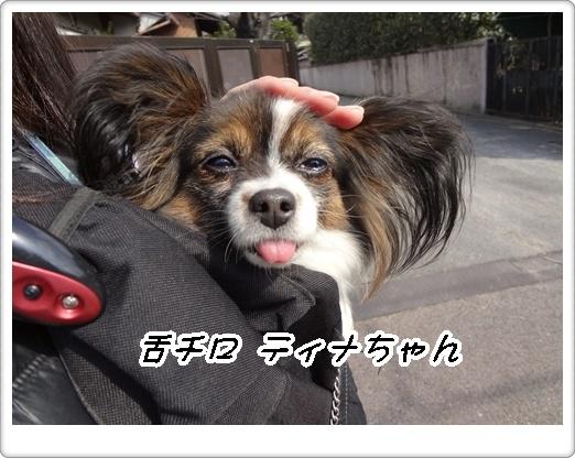舌チロ ティナちゃん