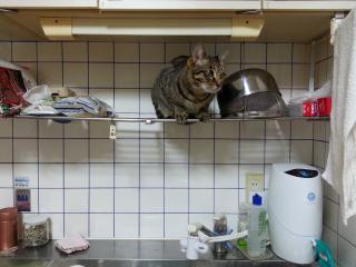 猫出没注意