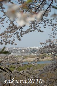 さくら2010-01