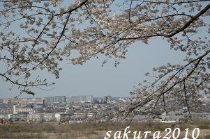 さくら2010-02