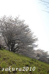 さくら2010-03