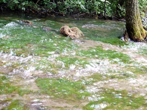 獅子が鼻湿原
