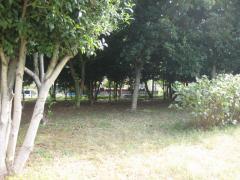 IMG_4829_convert_20121031231853.jpg