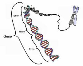 染色体モデル
