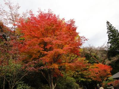 平家の里の紅葉