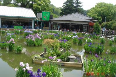 菖蒲園景色