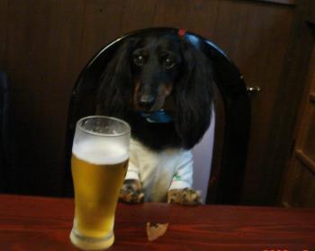 ロッキーとビール