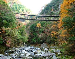 樅の木吊り橋景色