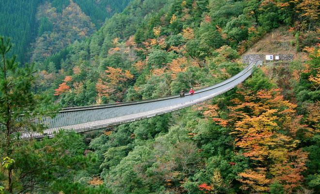 梅の木吊り橋景色