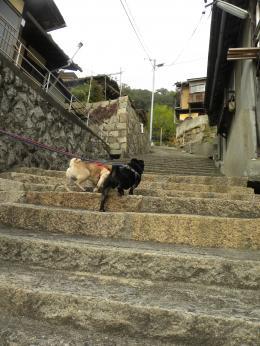 階段のまち