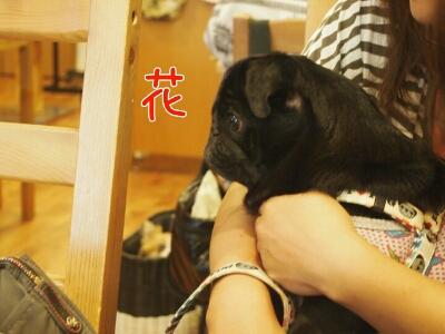 fc2blog_20120818185001440.jpg