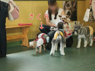fc2blog_2012081818541961e.jpg