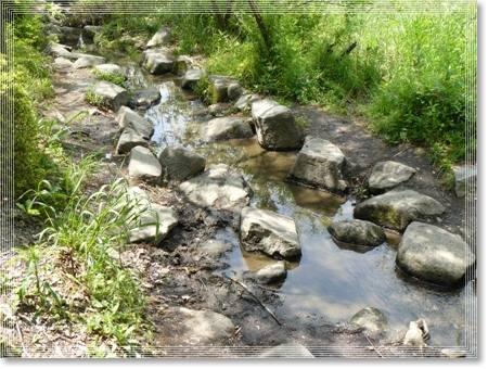 湿地公園1