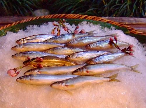 丸山魚ブログ