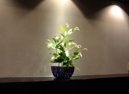 八泉花ブログ