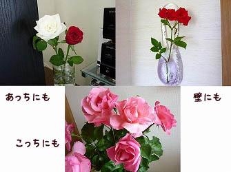 s-s-12070298 copy