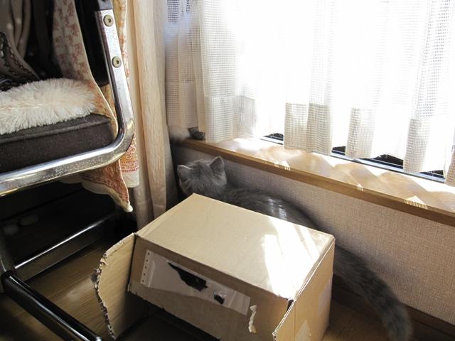 ヤムにご挨拶 2009-10-10 10-39-08