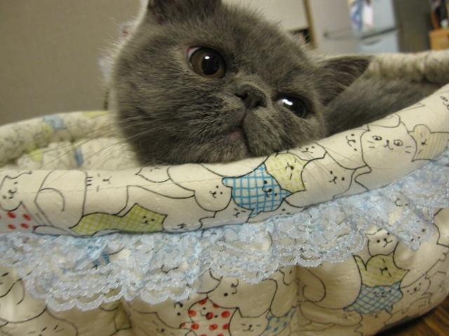 ふ~じこちゃんのベッド きたよー 2009-10-02 22-52-39