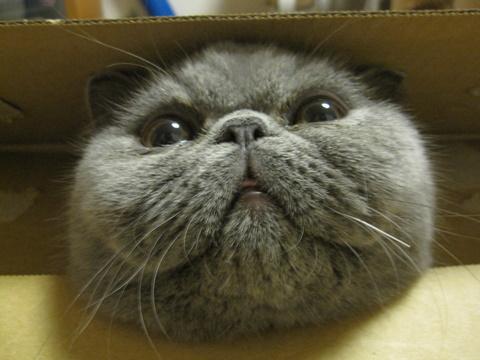 箱からこんにちは