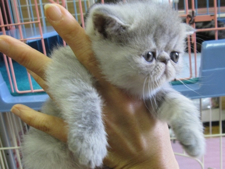 R)ぷくベビー抱っこ