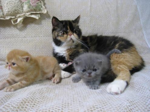 R)もにゃにゃんとと子猫2匹