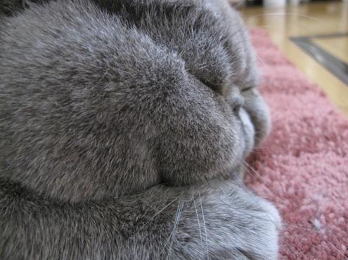 Rおはぎ寝る