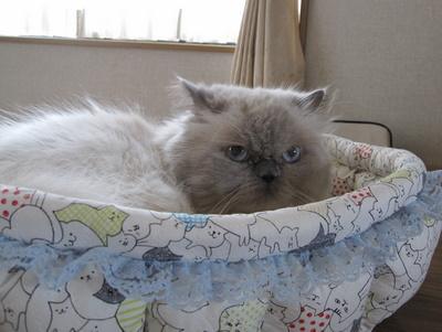 て)ふ~じこちゃんベッド 2 2009-10-02 12-15-32