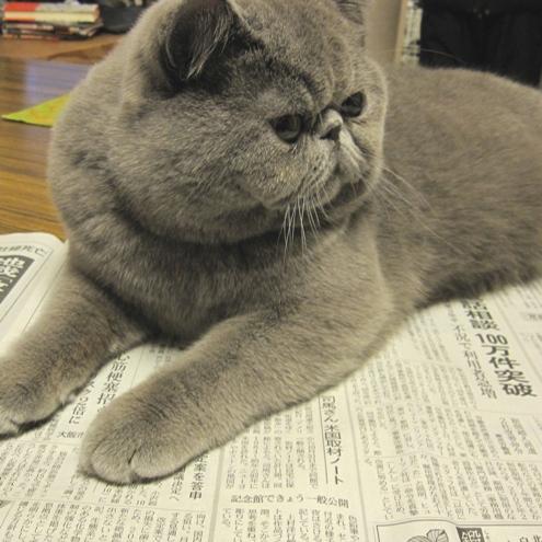 ま)新聞1