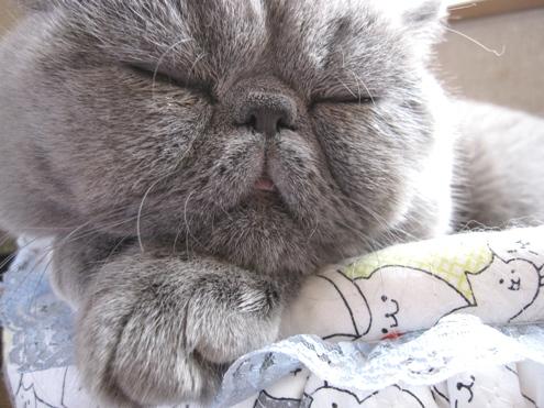 1)まる寝顔3
