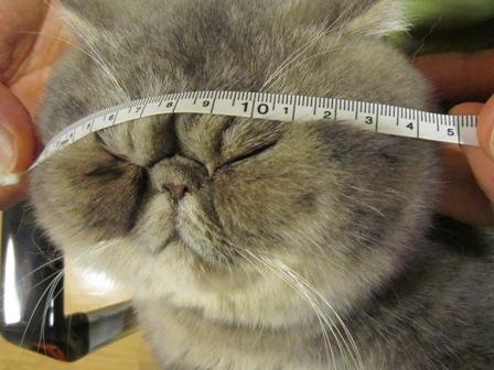 24.5)やっぱり14センチ
