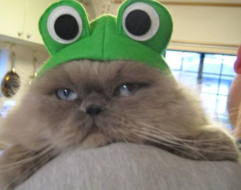肩にのるカエル