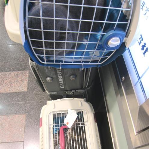 18)また新幹線で帰るですよ