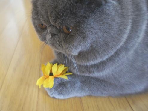 8)このお花は愛のお花ですよ