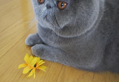 9)このお花は・・・