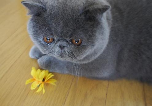 13)お花が 飛んできた