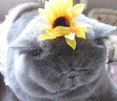 18)マルとお花