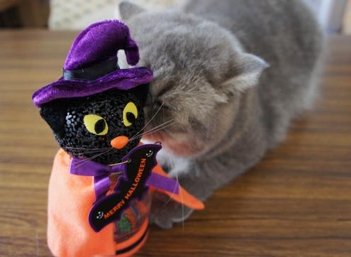 10)ハロウィン黒猫ちゃんにキス