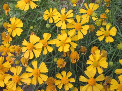 猛暑に耐えた お花たち