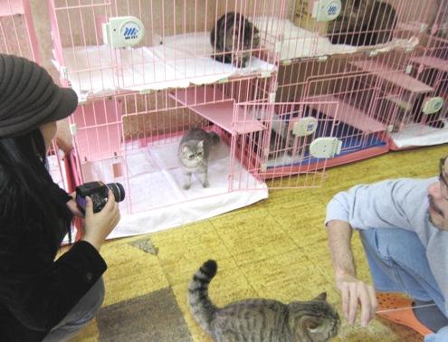 2)猫よりおジャジャさんを激写したいジャパン母さま?