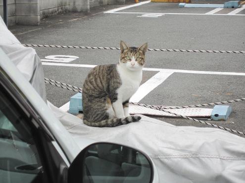 13)飼い猫ちゃんかな?