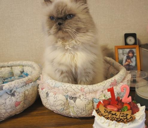 17)誕生日ケーキやじょ~