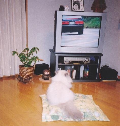 4)ご幼少のころからのTV好き