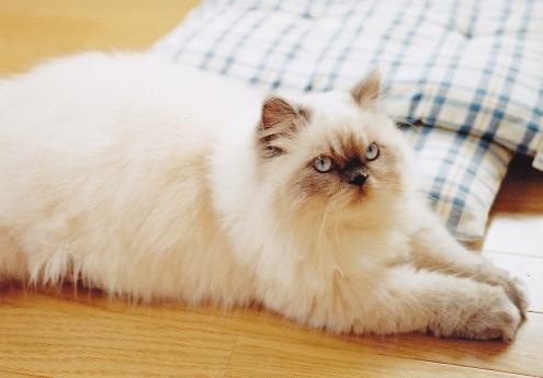 2)2002年猫めくり.-4