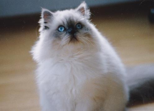 3)2002年猫めくり.-2