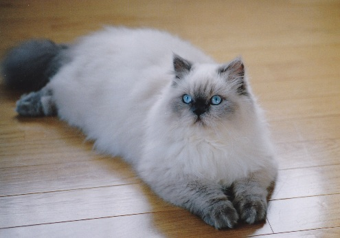 4)2002年猫めくり