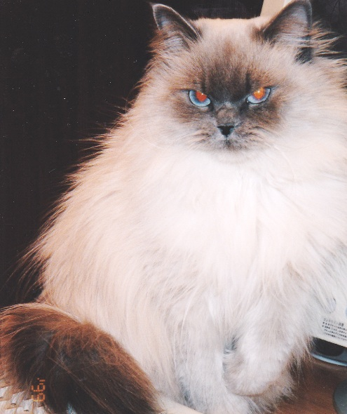 16)ガングロやむちゃ2歳